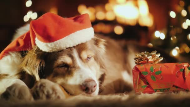 depositphotos 211932770 stock video a sweet dog is sleeping
