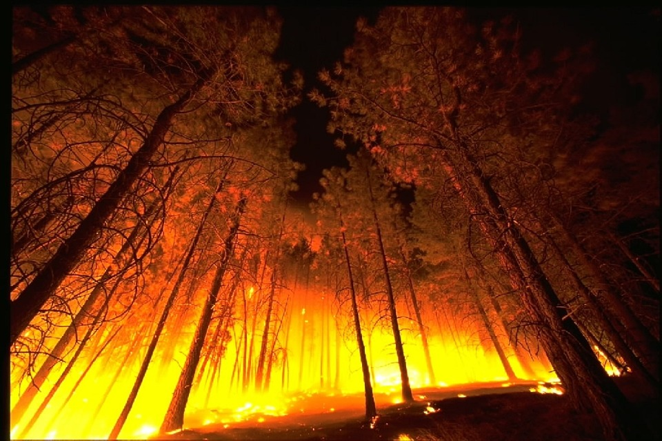bosque ardiendo